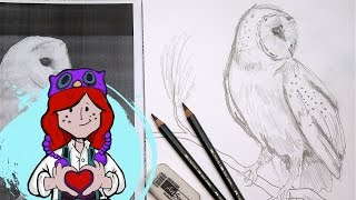Beginner How to Draw Barn Owl Tutorial