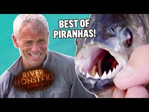 Best Of Pirahnas: Part 1 - River Monsters
