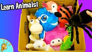 Jungle Animals in Box! Plushy Animal Learning for Kids with Squishee Nugget