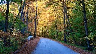 Vermont Fall Foliage - Positive Stress