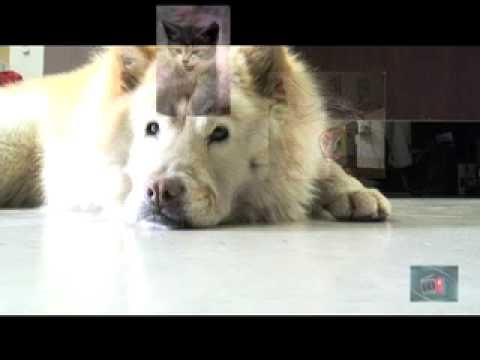 Dog sings jingle bells