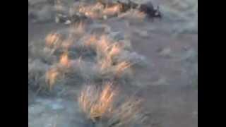 Jagd Terriers Vs Badger Part 1