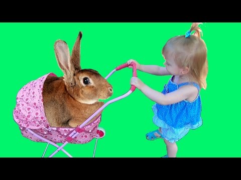 Little Girl Pushing Pink Stroller with Baby rabbit ʕ•͡ᴥ•ʔ Funny video for children