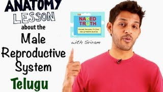 Basic Reproductive Anatomy for Men - Telugu