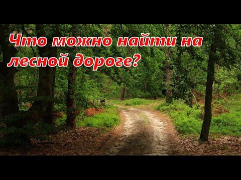 Что можно найти на лесной дороге?