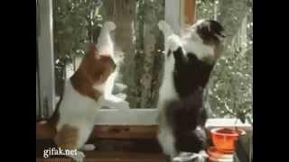 Видео кошки смотреть онлайн - подборка приколов!