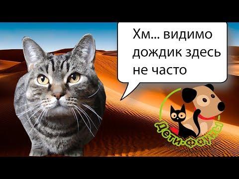 Как научить котенка пить воду из миски