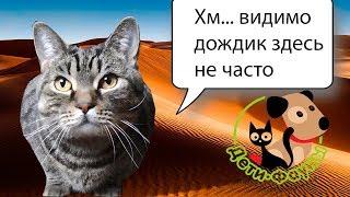 Кошка не пьет, как заставить кошку пить воду?