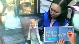 [다큐에세이92-2] 유기동물을 향한 은주씨의 따스한 손길 (1부)
