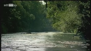 [Doku] Die schwarze Donau - Ein Fluss verschwindet [HD]