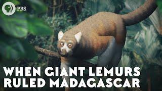 when-giant-lemurs-ruled-madagascar