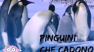 Gambar cover Pinguini Che Cadono - FuoriDiTesta