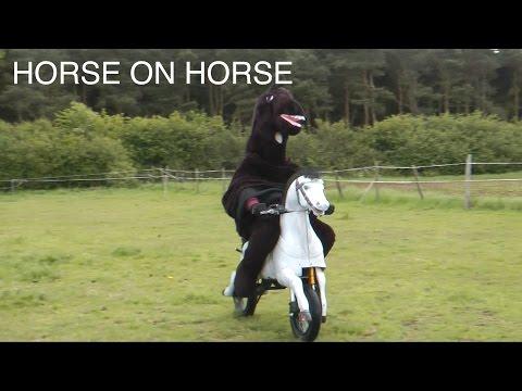 WTF Motorhorse