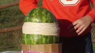 """Elizabeth's Watermelon Experiment - 3.5"""" Rubber Bands"""