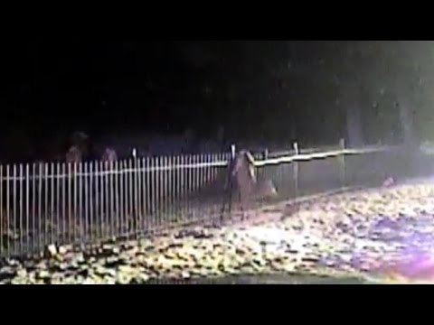 Police Rescue Deer After Its Hind Legs Get Stuck In Fence