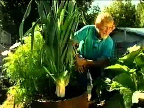 Секрет выращивания гигантских овощей.