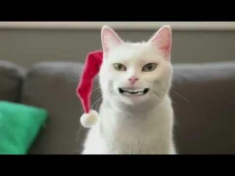 Funny Cat Videos Singing Jingle Bells