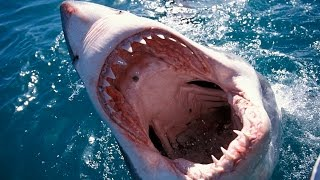10 Things You Didn't Know About Sharks