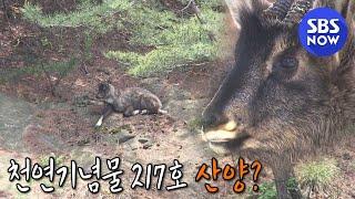 [순간포착 세상에 이런 일이] 선공개 '서울 아차산에 …