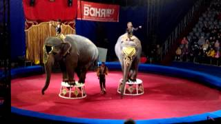 Цирк  в Тольятти.Индийские слоны