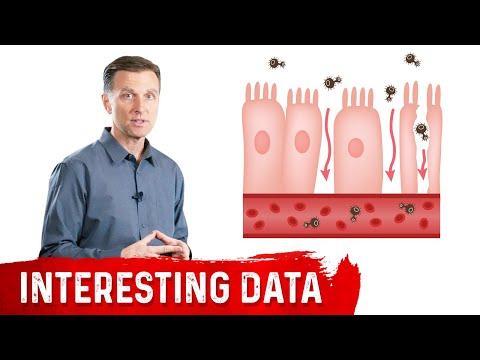 Intestinal Permeability or Leaky Gut