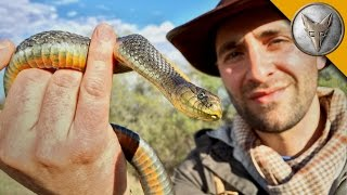 Slithery Snakes of the California Grasslands