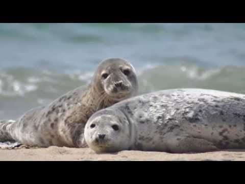 Seal  SEALS      Sounds and Pictures