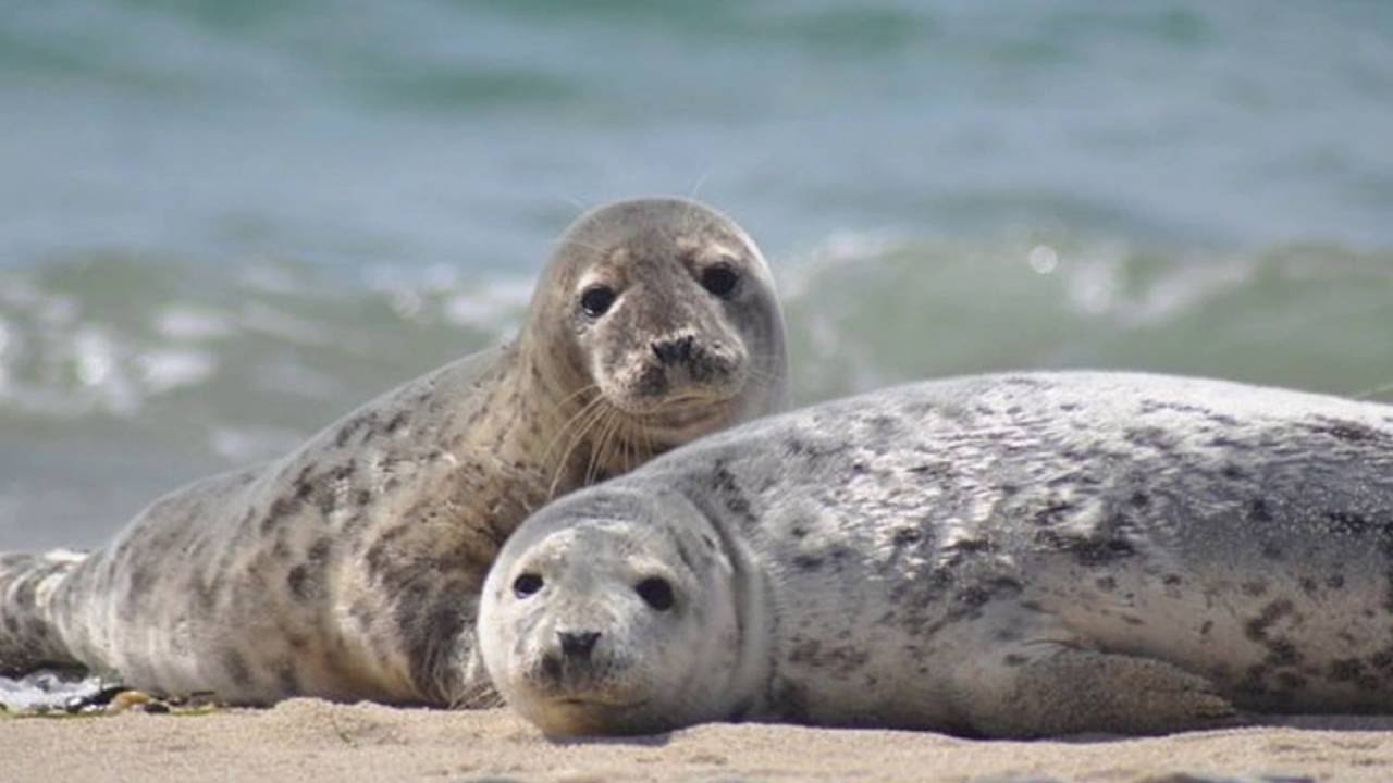 Seal SEALS Sounds and Pictures YouTube