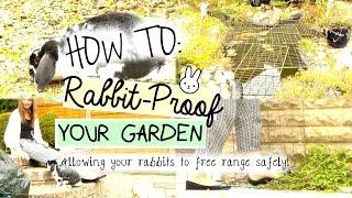 How To: Rabbit-proof Your Garden   Rosiebunneh