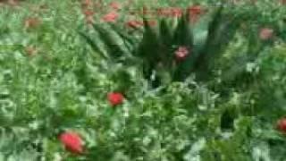 El Jardinero - Los Originales de..3gp