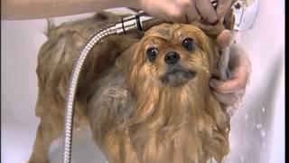 Spa-процедуры для животных в студии груминга