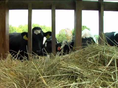 virginia farm bureau dairy cow welfare youtube. Black Bedroom Furniture Sets. Home Design Ideas