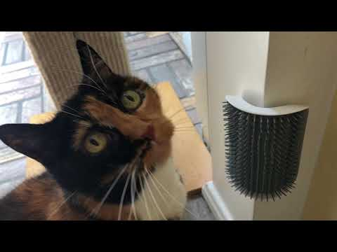 My cat went nuts for this wall-mounted brush