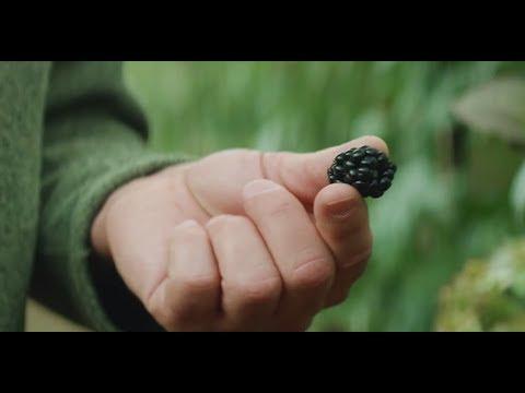 Driscoll's Blackberries | Pursuit Of Flavor