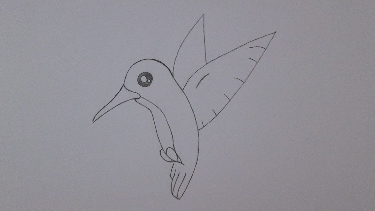 Cmo dibujar un colibr  YouTube
