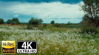4К UHD | Природа перед началом грозы. Шум холодного ветра. Мурашки по коже.