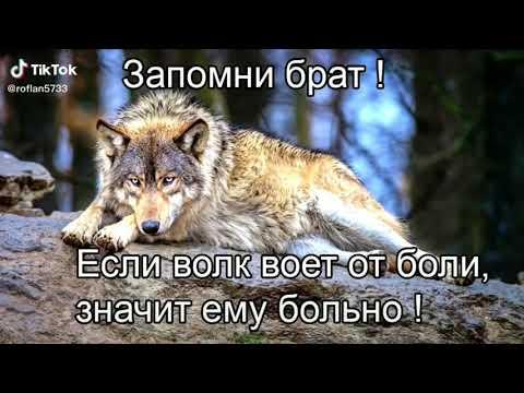 Цитаты волка из тиктока подборка #2