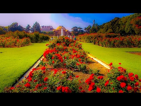A Walk Around The Magical Rose Garden, Exposition Park, Los Angeles