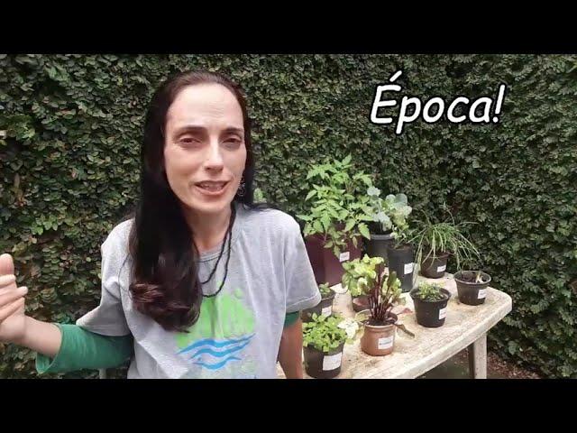 CEIC em casa | Flor da Época