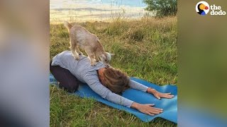 Goat Yoga Is The Best Kind Of Workout