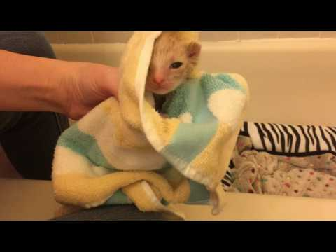 Baby Foster Kitten's Bath! Dirty and Many Fleas! Opening a Kitten's Eyes at 14 Days Old