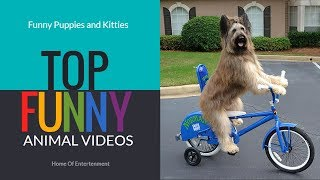 Very Funny Animals~Entertainment video