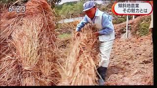 徳島が世界農業遺産認定