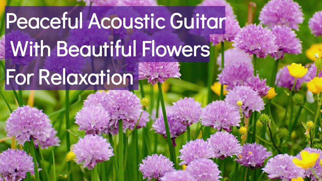 Peaceful Acoustic Guitar With Beautiful Flowers, Soothing Guitar Music For Relaxation.