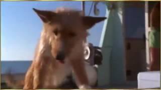 Дельфин спас собаку, которую хотела съесть акула!!!!