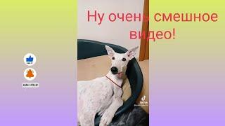 Собаки Приколы до слёз Смех Смешно Животные Приколы Смешные видео