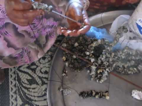 Oman Fisherwomen threading marine gastropod meat for outdoor drying (Khalfan Al Rashdi)