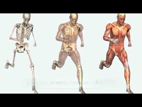 Our Body's Systems and Anatomy | Illustrated by a Rap Song