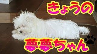 毎週、月曜日に配信。『きょうの夢夢ちゃん』をどうぞよろしく!! はじめ...