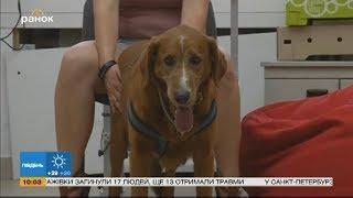 Интересные опыты: собаки и ожирение человека